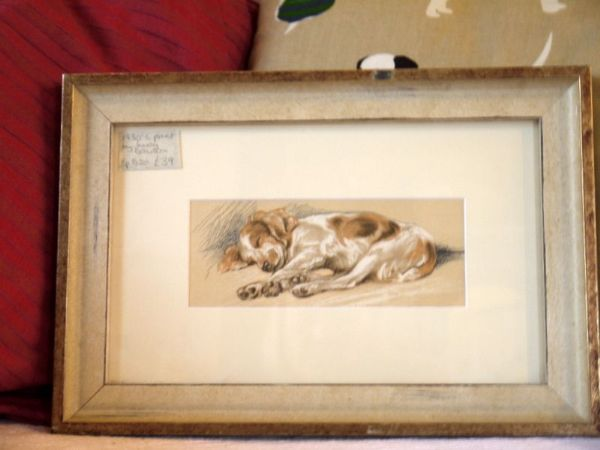 Little coloured Spaniel sleeping, legs stretched out  1930's print by Lucy Dawson